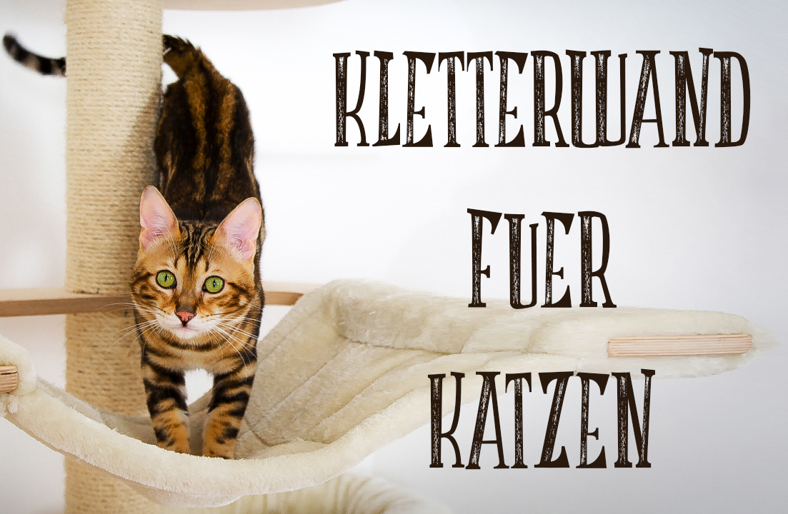 ein catwalk f r unseren bengal kater catwalk diy kletterwand f r katzen. Black Bedroom Furniture Sets. Home Design Ideas