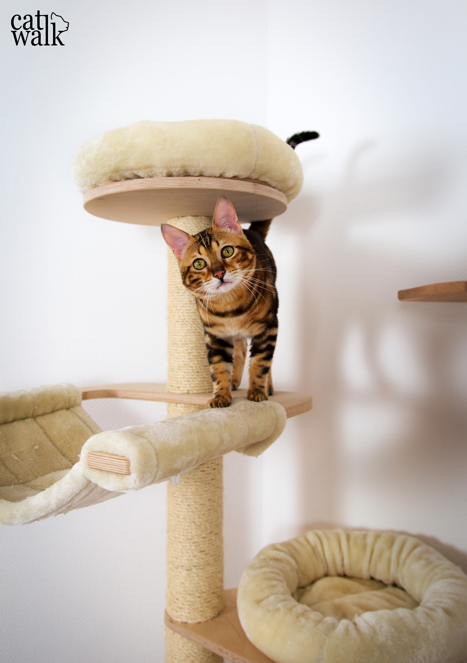 [:de]ein Catwalk für unsere Katze Cat Walk | DIY Kletterwand[:en]a Catwalk for our Bengal Kitten - Cat Walk | DIY [:]